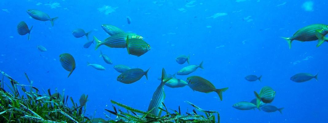 Accessori per la pesca subacquea